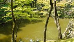 Pond at Kokedera Temple