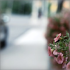 Finding the focal point (Maureen F.) Tags: city flowers summer cars cafe planters friday 50mm18 niftyfifty