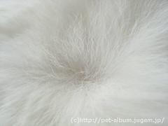 ミア(猫)の写真6