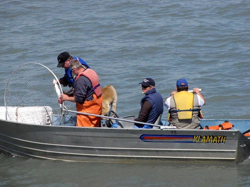 Kenai - Dip Net Fishing-8
