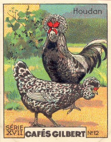 gilbert poules 12