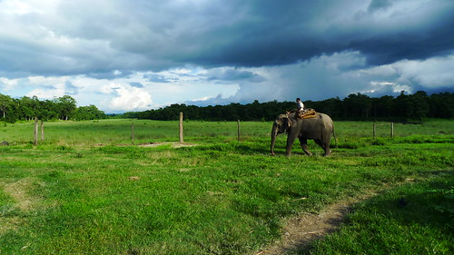 Chitwans elephant