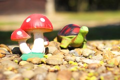 Turtle's Dream (Herv Photos) Tags: brazil art brasil dof rj pentax turtle tartaruga tortue brsil penedo k100d