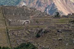Machu Picchu viewed from Putucusi