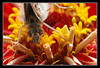 Butterfly on Flower (matt :-)) Tags: flower macro butterfly bug insect nikon ring micro reverse inverted fiore mattia inverse farfalla insetto naturesfinest 50mmf14d 105mmf28dmicro macroextreme reverted nikond80 consonni mattiaconsonni