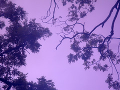 Up Out There (ged carpizo) Tags: blue trees sky black bus nature silhouette catchycolors indigo sonydscw170