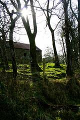 Farm, Co Cavan (Jacqueline Galvin) Tags: trees ireland sun farm ethereal mysterious oldfashioned jacquelinegalvin fairylandscape