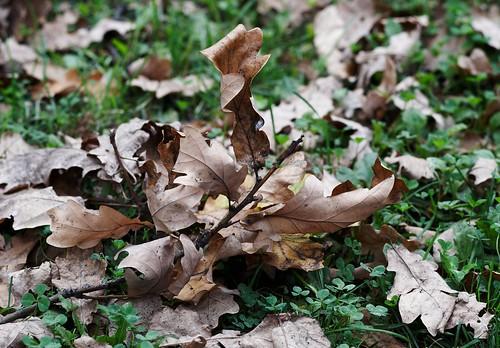 Autumn sheet ©  harry.popoff