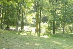 _MG_6306.JPG (zimbablade) Tags: trees sleepyhollow dougmiller videopoem