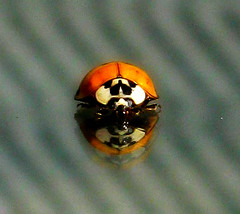 ladybug (Jenna Walmer) Tags: red bw white black reflection tree lady bug mushrooms spider back fungi spots trunk wedded alonf