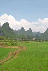 Fields in Xing Ping [] (daveonhols) Tags: china  guangxi  xingping