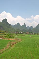 Fields in Xing Ping [] (daveonhols) Tags: china  guangxi  xingping