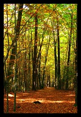 Walk in the autumn woods (ewka2205) Tags: wood las autumn tree leaves forest walk spacer jesie licie drzewa ewka2205