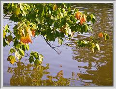 Pflzerwald (Annweiler) 08.09.2009 (Dieter Meyer) Tags: trees reflection water wasser spiegelung pfalz spiegelungen pflzerwald annweiler dietermeyer