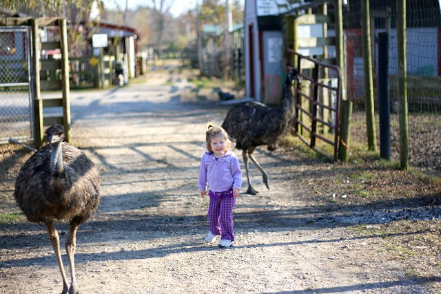 abby and the emus