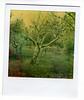 the orchard (bunchadogs & susan) Tags: thanks polaroid sx70 orchard atzfilm texturesbylesbrumes andflypapertexture