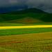 beautiful fields with yellow stripe