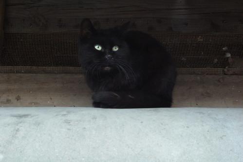 Today's Cat@20091122