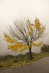yellow tree (Thalia Nouarou) Tags: winter fall greece choose ena arkadia peloponnese nikond60 the4elements       thalianouarou   wwwthalianouarouwebscom wwwepathlogr