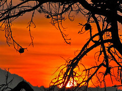 Sunset over the Marin hills (2composers) Tags: california sunset red orange sun tree silhouette pine evening branches marin bayarea marincounty pointrichmond sx1best compositionsphotography