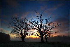 Muir Oaks (angus clyne) Tags: morning blue autumn trees winter red sky orange cloud mist tree fall field fog clouds sunrise dead dawn scotland living oak frost branch bare branches perthshire scottish frosty oaks dying thorn muir flikcr taymount deadish leefilters muirofthorn