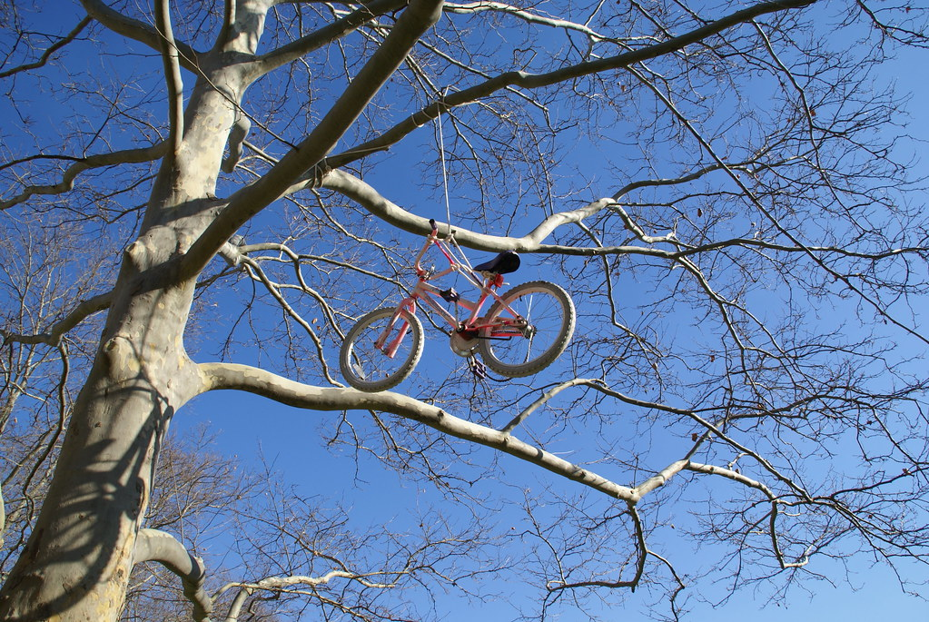 Another angle of the bicycle in the tree