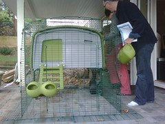 Santa brought a backyard chicken coop for Chri...