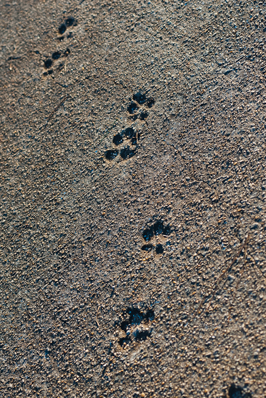 Day 88: Dog Tracking