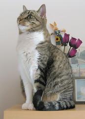 197-November'09 (Silvia Inacio) Tags: cats cat tabby gatos gata princesa