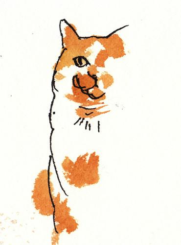 cat 284