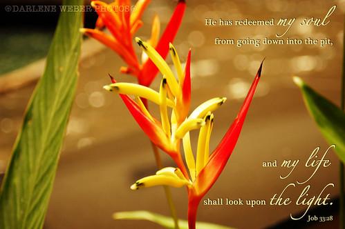 Job 33:28