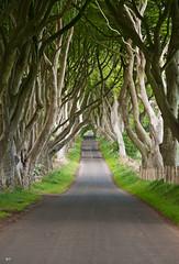 The Dark Hedges II (Matteo Foiadelli) Tags: road trees ireland nature landscape nikon northernireland antrim beeches armoy foiadelli darkhedges d300s doublyniceshot tripleniceshot mygearandme mygearandmepremium mygea