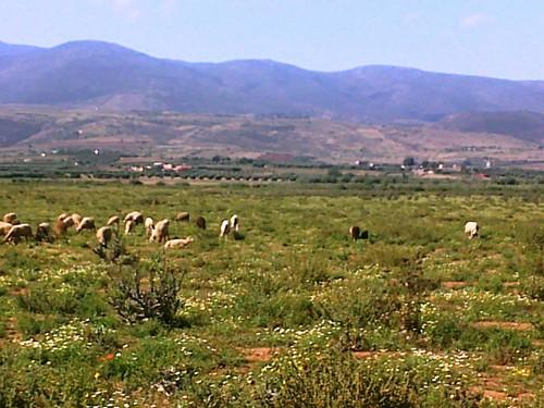 Triffa Beni Znassen جبال بني يزناسن تريفة