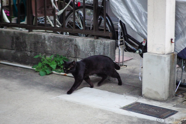 Today's Cat@2014-03-11
