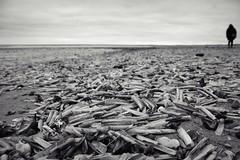 Sea of Razor Shells (Chris Goodacre) Tags: canoneos550d eastcoast hunstanton razorshells monochrome photoscape chrisg35mm