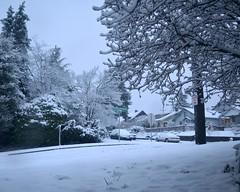 2017-02-06 Mornnig Snow