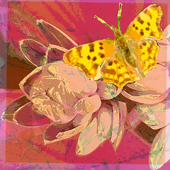 Summertime (Tedje51) Tags: photoshop butterfly challenge vlinder theart awardtree colorsofthesoul amazingeyecatcher