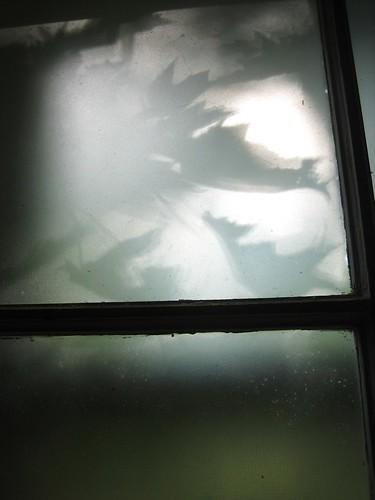 090718. shadows.