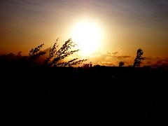 Warrington Sunset, July'09 (mattweedon) Tags: sunset england nature warrington cheshire wildlife burtonwood