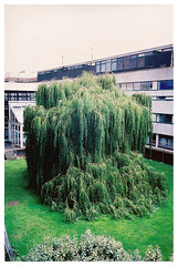 triffid (toby price) Tags: nottingham tree university cascade triffid sciencecity