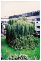 triffid (toby price) Tags: nottingham tree university cascade triffid sciencecity