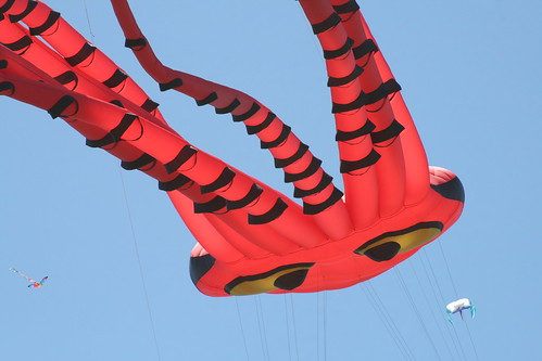 Octopus Kites Perspective