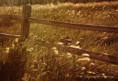 Whispering Wind (SLEEC Photos/Suzanne) Tags: texture grass fence nikon action fields d80 bigbearcalifornia betharmsheimertexture florabellatexture sailsevenseas coppercloudsilvernsun