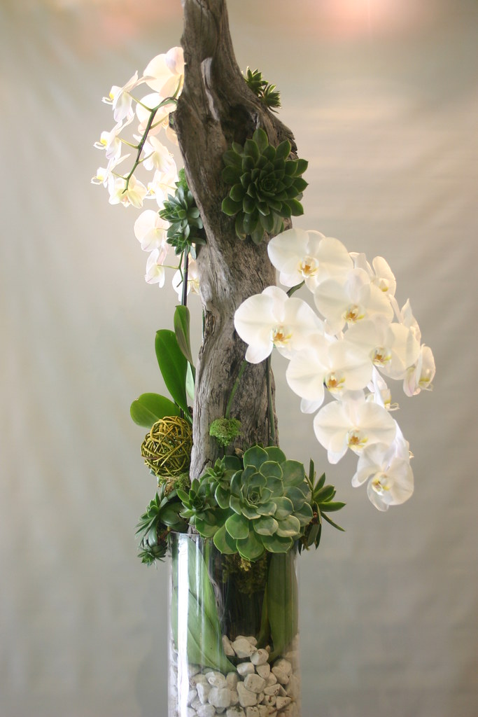 Orchid with succulents and driftwood 039