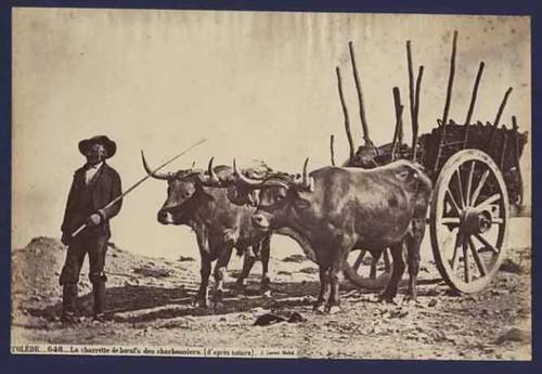 Boyero-carbonero en Toledo hacia 1860. Foto Jean Laurent