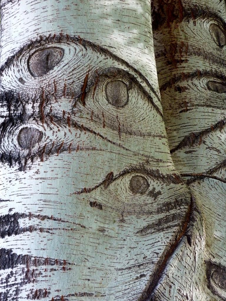Los ojos del arbol