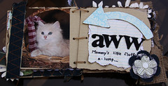 Chesney (luv*photography) Tags: scrapbooking prima domesticlonghaircats alteredscrapbooking