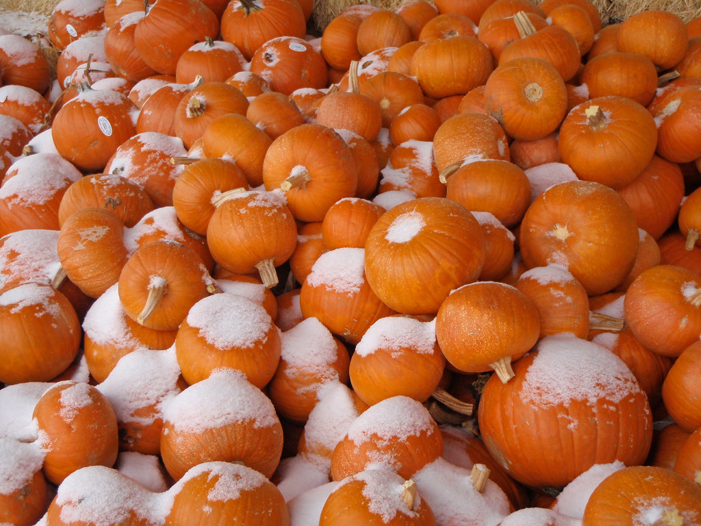Frosty pumpkins