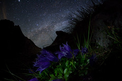 Campanula lasiocarpa of Milky Way (masahiro miyasaka) Tags: flowers blue flower beautiful japan night canon stars iso3200 star purple nightshot violet led fisheye galaxy astrophotography   campanulaceae mybest campanula technique  alpin oneshot milkyway bluish  alpineplant bellflower    3000m alpineflower   mountainflowers glockenblumen  alpenflora alpinflower sigma15mmf28exdgfisheye    Astrometrydotnet:status=failed campanulalasiocarpa  eos5dmark  Astrometrydotnet:id=alpha20100916290922