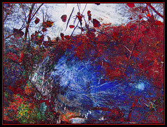 Blue and Red Impression (Tim Noonan) Tags: blue autumn red sky art water leaves digital forest photoshop pond vibrant manipulation impressionism abstraction legacy mosca hypothetical tistheseason artdigital sharingart maxfudge awardtree maxfudgeexcellence graphicmaster miasbest miasexcellence maxfudgeawardandexcellencegroup daarklands flickrvault magicunicornverybest magicunicornmasterpiece trolledproud trolledandproud magiktroll
